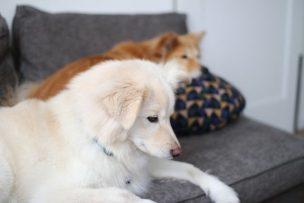 愛犬が死ぬ夢の夢占いの意味6選!犬が死ぬ夢は正夢になる?